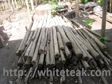 kayu gamelina